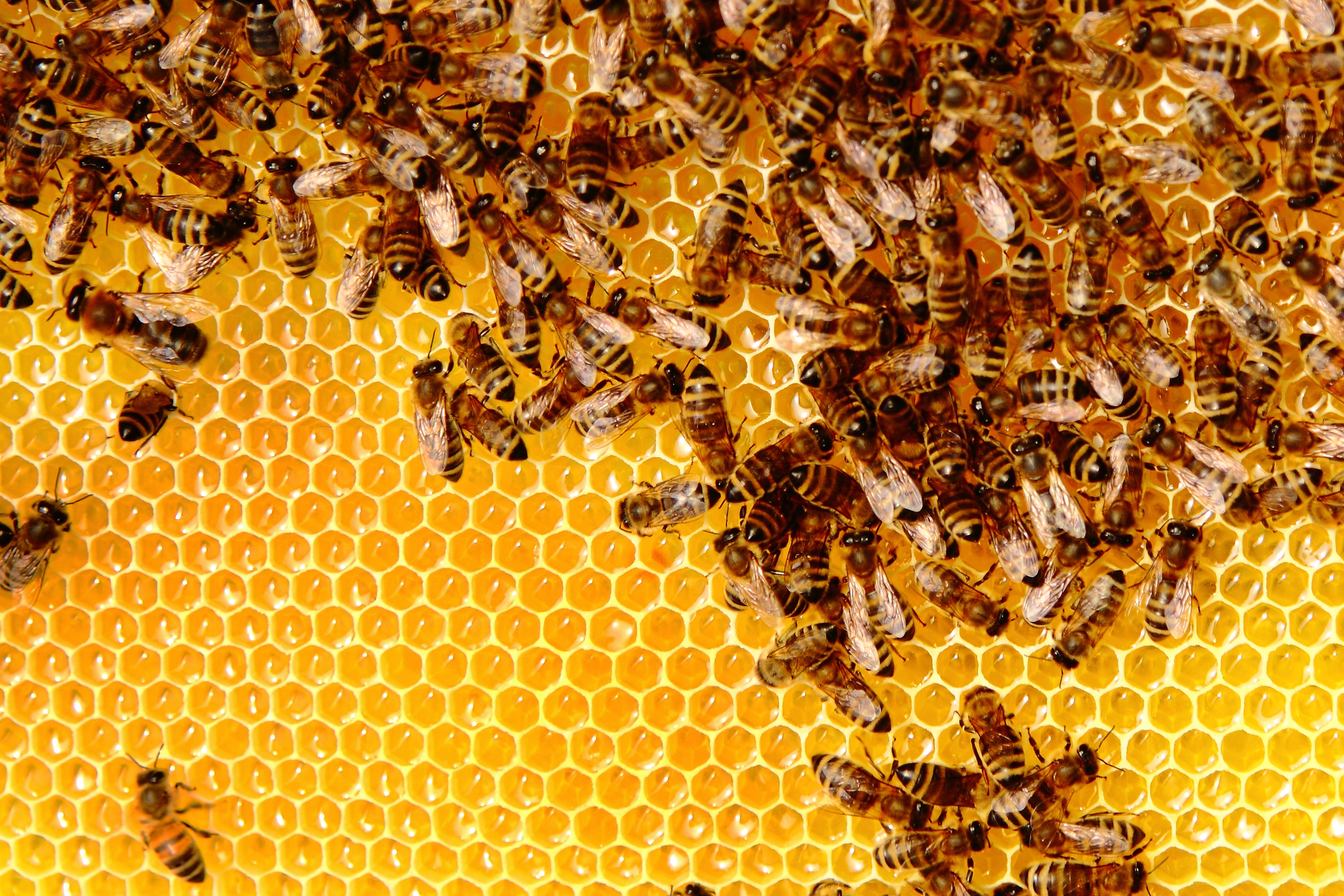 Royal Jelly and Stem Cells